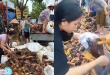 Photo of Người dân miền Trung nén đau thương bán 100k/3 con để gỡ vốn