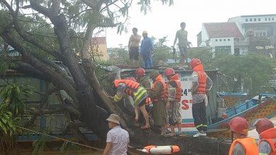 Photo of Giải cứu 3 người mắc kẹt trong thuyền rồng bị cây gãy đè trúng