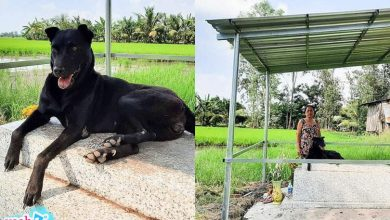 Photo of 3 năm nằm trên mộ cậu chủ đã mất, chú chó đã đợi được điều diệu kỳ