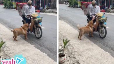 """Photo of Chú chó mua bánh mì thiếu một cách """"uy tín"""" khiến nhiều người phát cuồng: Chắc là mối ruột của chú bán bánh mì rồi!"""