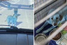 Photo of Băng đảng chó Nga khiến du khách hết hồn vì chặn đầu xe với bộ lông xanh lè