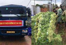 Photo of Hỗ trợ hàng chục tấn rau xanh từ Đắk Lắk đến tận nơi cho người dân TP.HCM và Bình Dương giữa mùa dịch