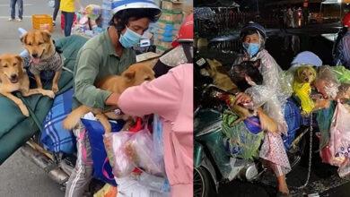 """Photo of Đôi vợ chồng ôm theo 17 chú chó kể về hành trình hồi hương: Thà nhịn ăn chứ quyết không bán """"bạn"""""""