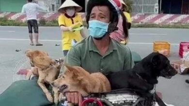 Photo of Vụ 15 chú chó bị tiêu hủy ở Cà Mau: Trưởng trạm y tế xin nghỉ việc vì không chịu nổi áp lực dư luận