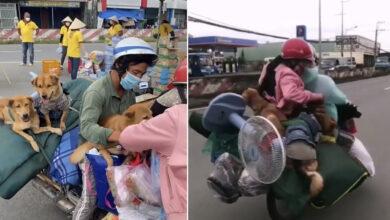 Photo of NÓNG: Cặp vợ chồng từ Sài Gòn về Cà Mau tránh dịch khiến dân mạng xôn xao tiết lộ về tình hình của bản thân và những chú chó hiện tại